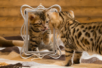 two kittens playing with the photo frame, looking at each other