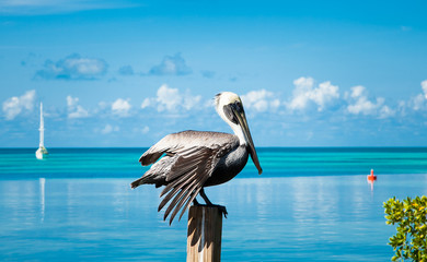 Pelican bird resting on the wooden pillar in front of the sea waters