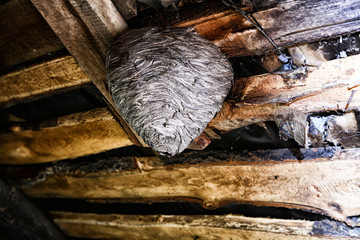 Big wasp nest in the attic of a country house