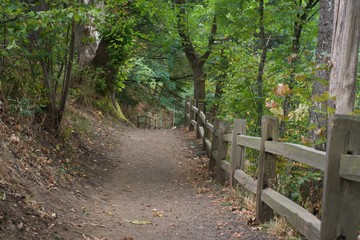 Trail with a fence to one side through a forested park.