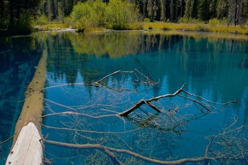 A log in the clear blue water of the spring fed Little Crater Lake near Mt. Hood, during late summer in Oregon