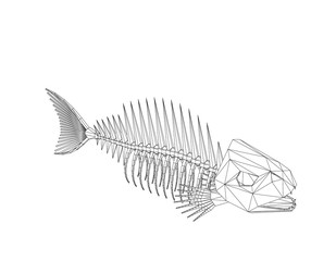 Polygonal Fish skeleton. Isolated on white background. Vector outline illustration.
