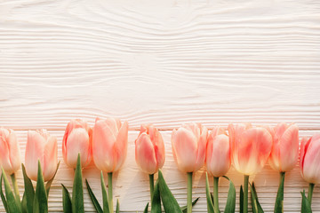 pink tulips on white rustic wooden background flat lay. top view of spring flowers in soft morning sunlight with space for text. hello spring. banner and border