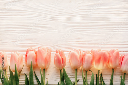 Pink Tulips On White Rustic Wooden Background Flat Lay Top View Of Spring Flowers In