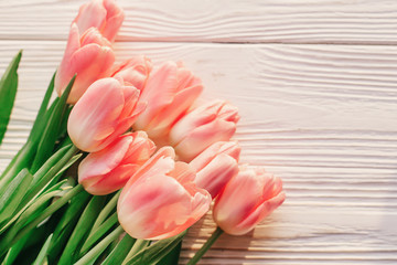 beautiful pink tulips on white rustic wooden background. tender view of spring flowers in soft morning sunlight with space for text. hello spring. blogging concept