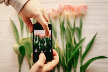 hand holding phone taking photo of stylish flower flat lay, pink tulips on white wooden rustic background. spring fresh mood. instagram blogging workshop concept. space for text