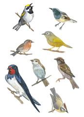 Watercolor set of bird