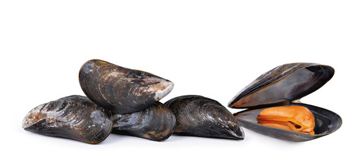 Fresh mussel isolated on a white background.