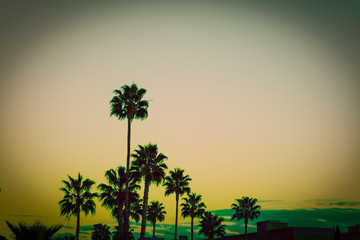 Palm trees at sunset in Los Angeles