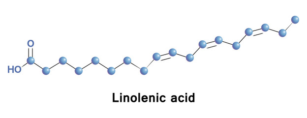 a Linolenic is an n 3 fatty acid. It is one of two essential fatty acids. It must be acquired through diet. ALA is an omega-3 fatty acid found in seeds, nuts and many common vegetable oils