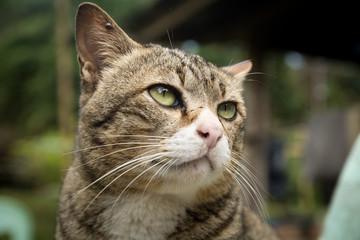 Closeup the cute cat