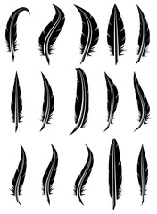 vector set of black and white feathers