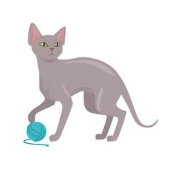 Peterbald cat Vector Flat Design Illustration