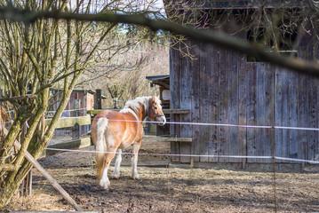 Pferd auf einer Koppel hinter einem Elektrozaun