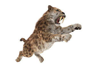 3D Rendering Sabertooth Tuger on White