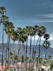 Palm group in Santa Barbara, California - stormy sky