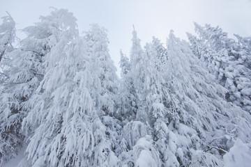 Winter im Nebel