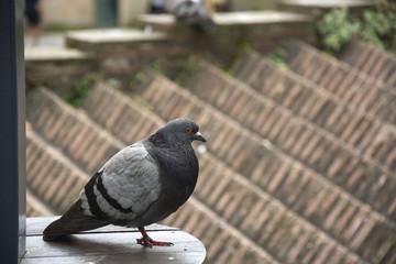 Bird 89