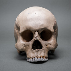 skull without a jaw