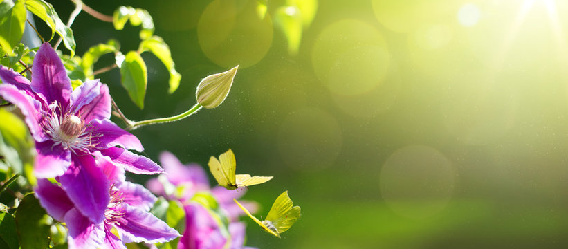 art Spring or summer flower background; Easter landscape