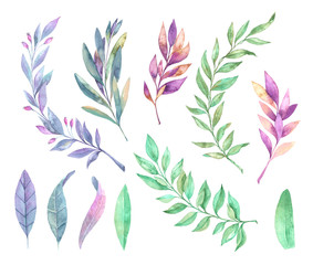 Hand drawn watercolor illustration. Spring leaves and branches. Floral design elements. Perfect for invitations, greeting cards, blogs, posters and more