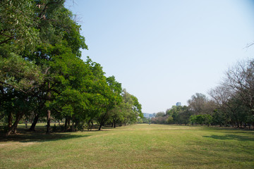 Landscape of public park in the city