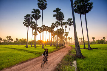 woman riding bicycle to go home accross the sugar palm tree farm in the evening. Wall mural