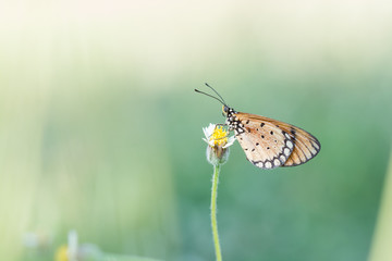 butterfly fly in nature.