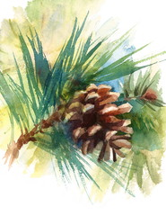 Pine Cone On Branch Hand Painted Watercolor Nature Forest Illustration