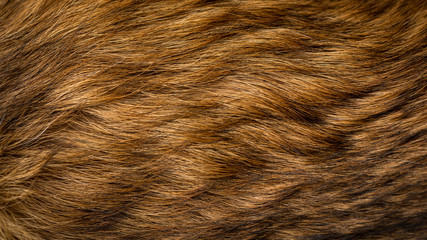Brown and beige dog fur texture