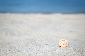 Beautiful sea shell on a paradise beach