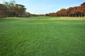 beautiful green lawn in public park