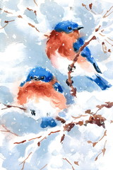 Two Bluebirds Birds sitting on the Branch Watercolor Hand Painted Greeting Card Winter Scene Christmas Greeting Card Illustration