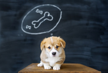 Portrait of a corgi puppy against the background of the beautiful drawing in studio. The puppy dreams of tasty bone.