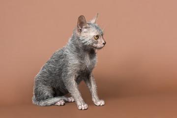 Katzen-Werwolf-13712