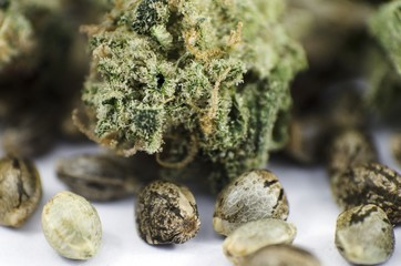 Detail closeup view of medical marihuana seeds and bud