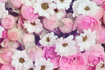 Pink roses and white daisy flowers for holiday background