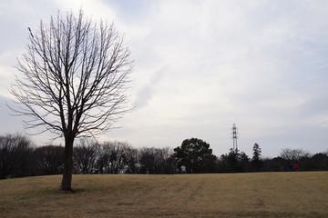 冬の公園 日暮れ 夕方 芝生 木 枯れ木