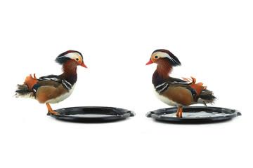 two mandarin duck
