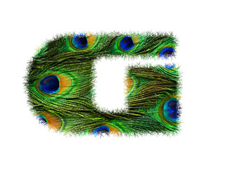 High resolution upper case letter G made of peacock feathers alphabet isolated on white background