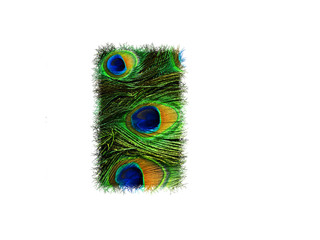 High resolution upper case letter I made of peacock feathers alphabet isolated on white background