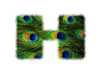 High resolution upper case letter H made of peacock feathers alphabet isolated on white background