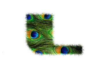 High resolution upper case letter L made of peacock feathers alphabet isolated on white background