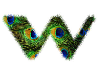 High resolution upper case letter W made of peacock feathers alphabet isolated on white background