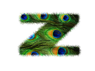 High resolution upper case letter Z made of peacock feathers alphabet isolated on white background