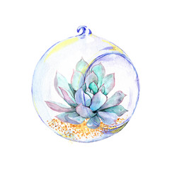 Succulent in glass ball. Watercolor