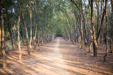 road is in the forest