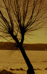 beautiful tree on the background of a frozen lake in the winter