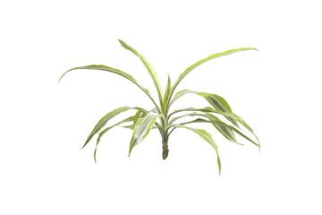 Houseplants palm.