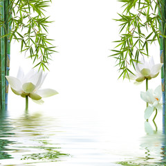 reflets aquatiques de bambous et lotus blanc